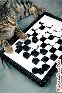 Passo a Passo : : Jogo de Damas