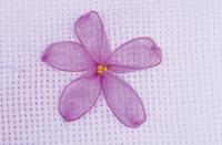 flores-rosas-1