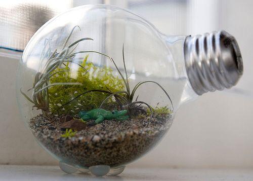 artesanato mini jardim:Mini jardim na lâmpada