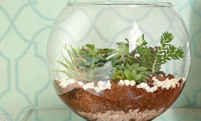 mini jardim de vidro:Terrário passo a passo