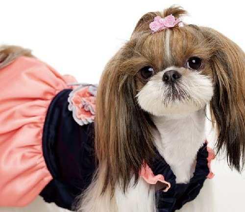 vestido-yuly-para-pet-14459-MLB2787299982_062012-O