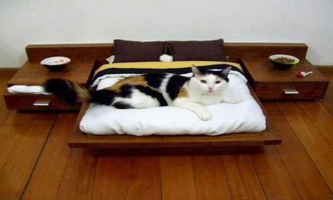 Cama-gato-1