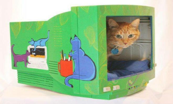 cama-gato-computador