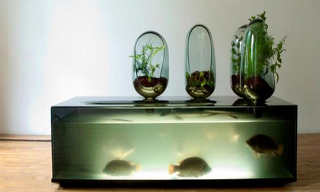 aquario 3