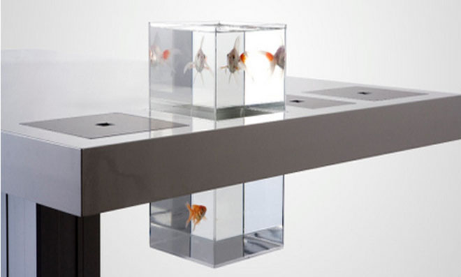 aquario 6