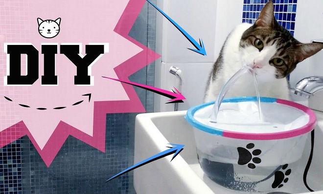 Aprenda como fazer uma fonte para gatos